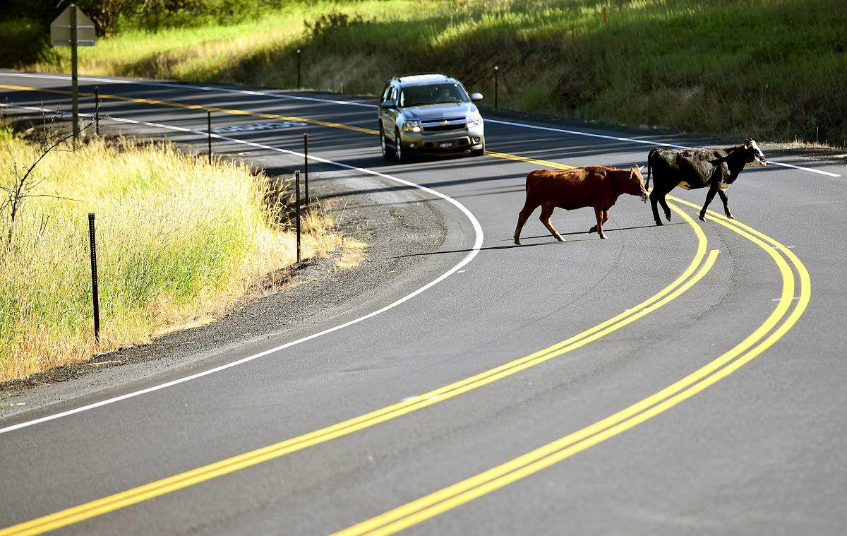What kinds of animals are covered under open range law?