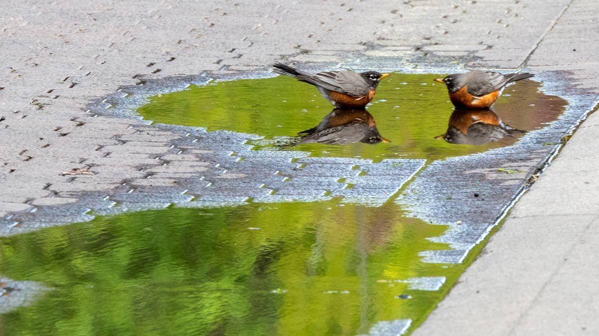 Wildlife experts: It's OK to feed the birds