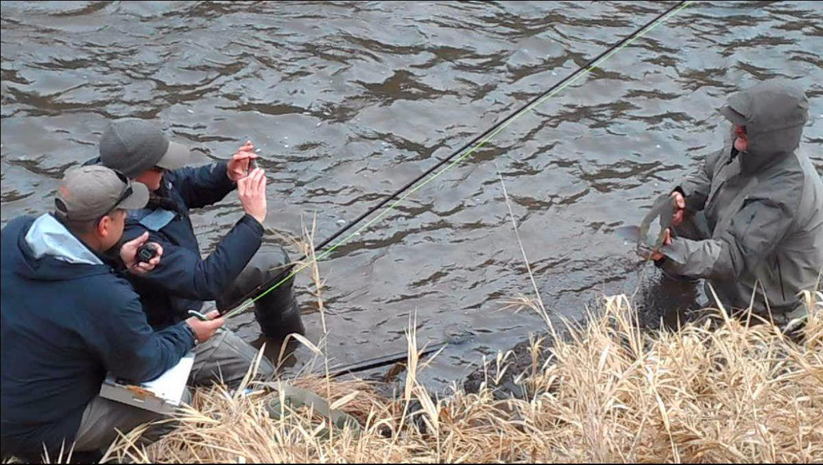 Studies: Done right, catch and release isn't lethal