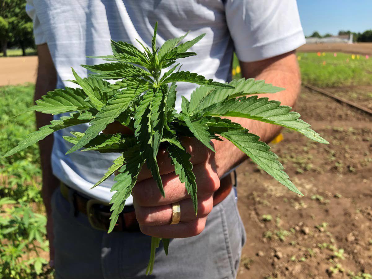 Markets get serious about hemp