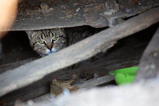 City helps spay, neuter feral cats