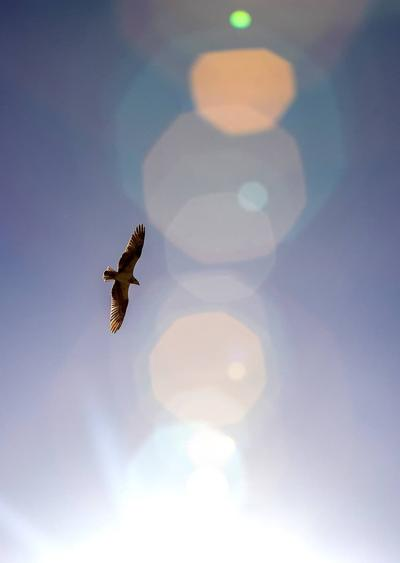 Soaring in the sunlight