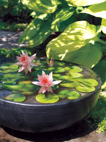 Enjoy Gardening Without The Breaking Your Back With This: Stewart: Enjoy Growing Water Plants Without The Pond