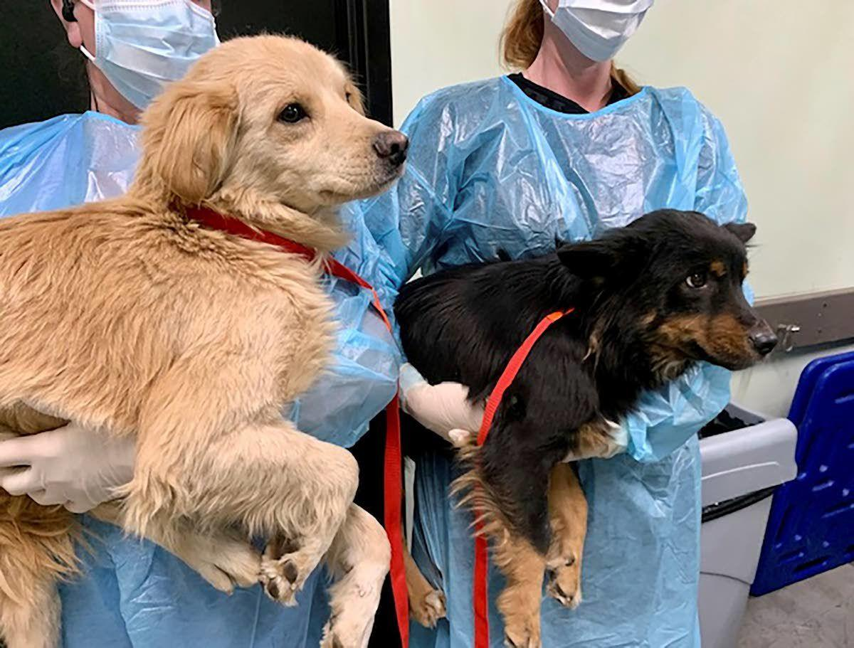 Authorities rescue 21 badly neglected dogs