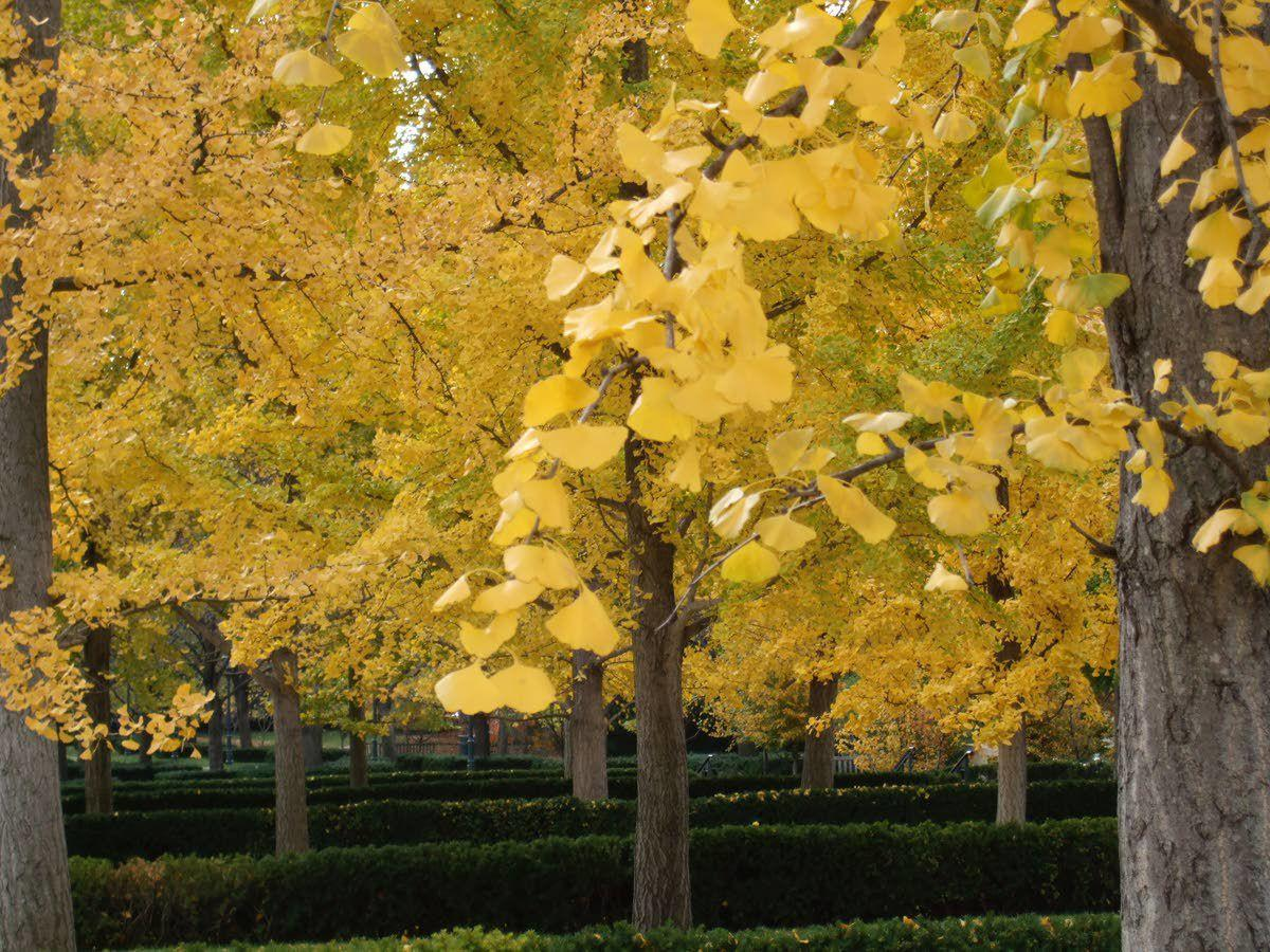 Consider tree season