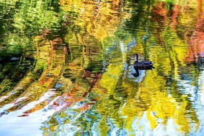 Floating on autumn hues
