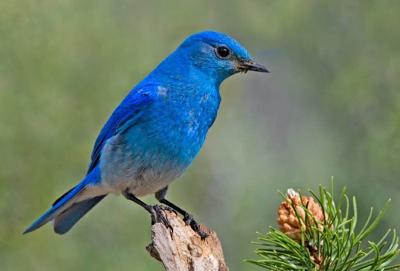 Report paints gloomy picture for birds