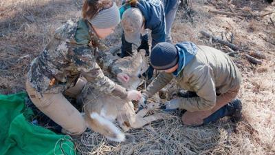 Predator-Prey Project video gives glimpse of Washington carnivores