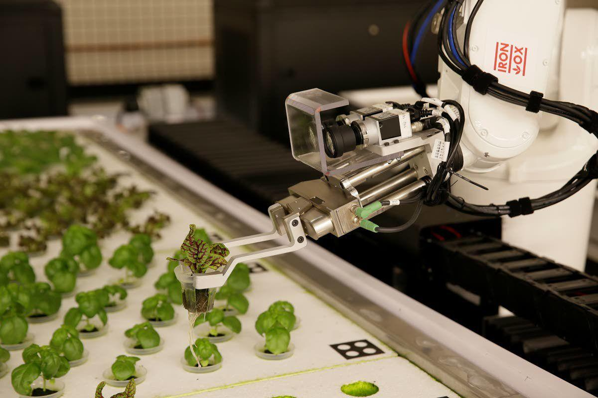 Beep, boop, beep: Are robots the farmers of the future?