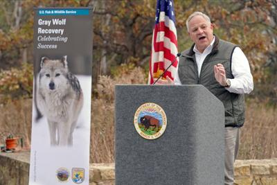 Trump officials terminate gray wolf protections