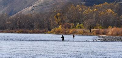 Idaho opts to suspend steelhead season