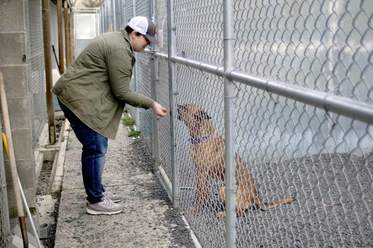 Rescuing animal rescue organizations