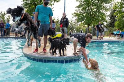 Dog day at the water park