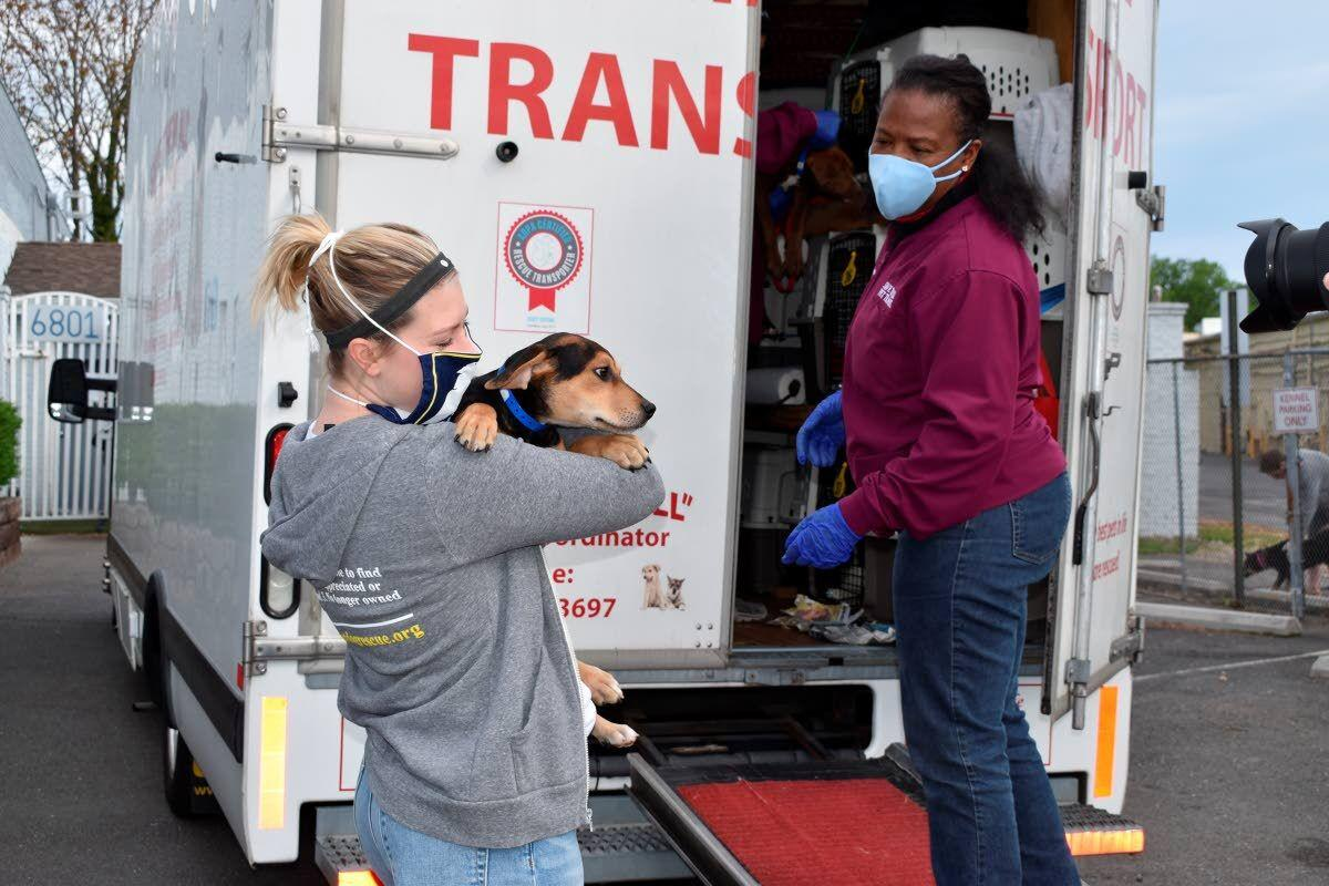 Puppy pipeline runs from Georgia northward to adoptive homes