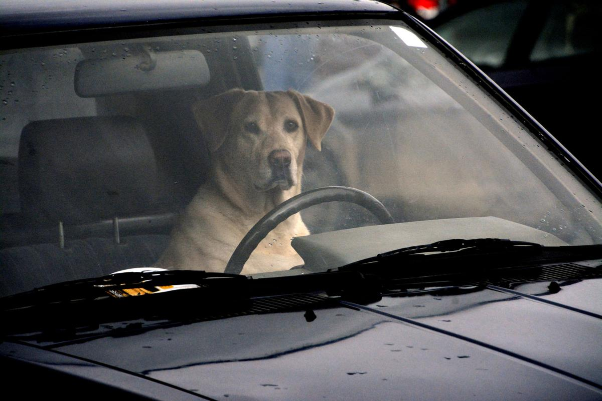 'Dog is my co-pilot'