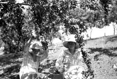 Blast from the Past / Sisters pick cherries in Genesee