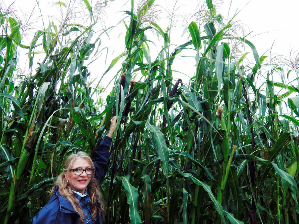 Family's Indian corn keeps an ear to history