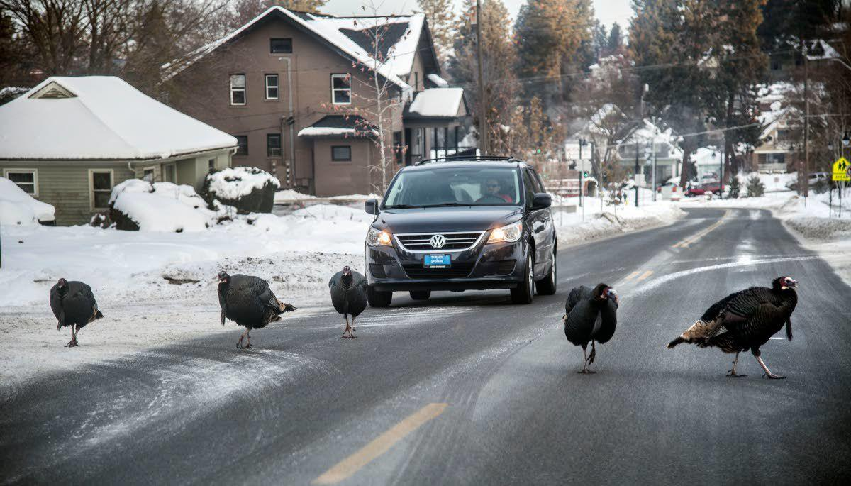 Are turkeys taking over?