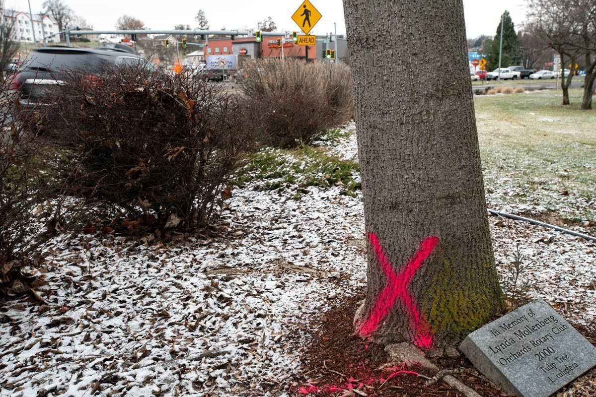 Winter Spirit organizers embrace tree removal