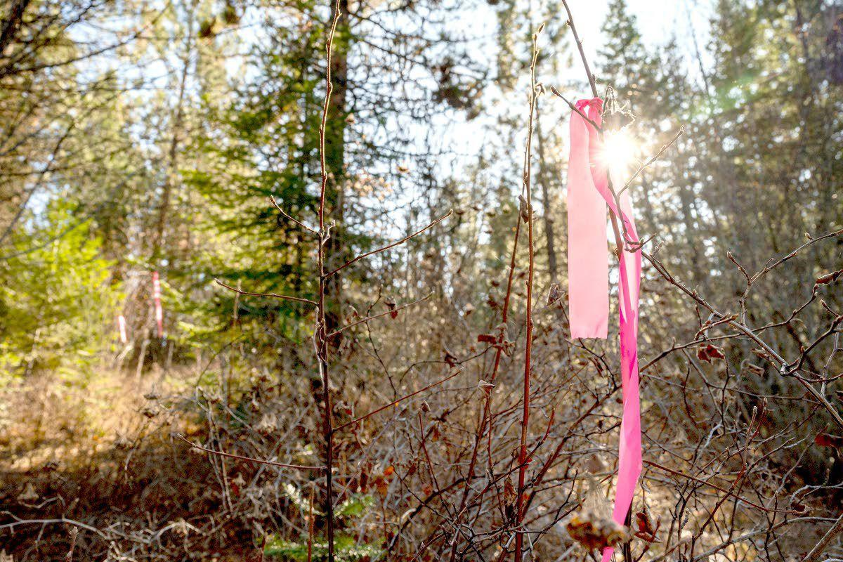 Forest thinning project slated for Fields Spring State Park