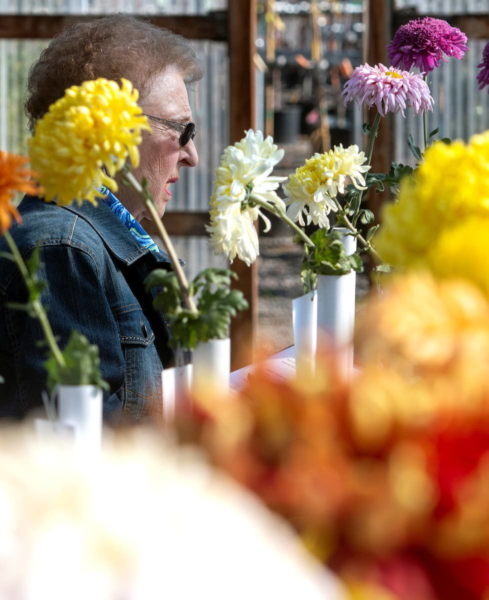 Edith Cole Looks At A Variety Of Flowers On Display At The 34th Annual  Autumn Flower 34th Annual Autumn Flower Show At Pattu0027s Garden Center In  Clarkston.
