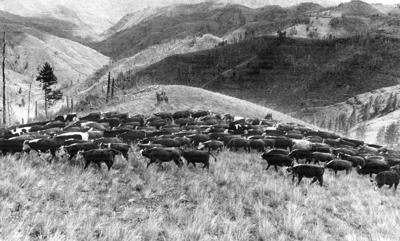 Blast from the Past / 1979: Home on the range