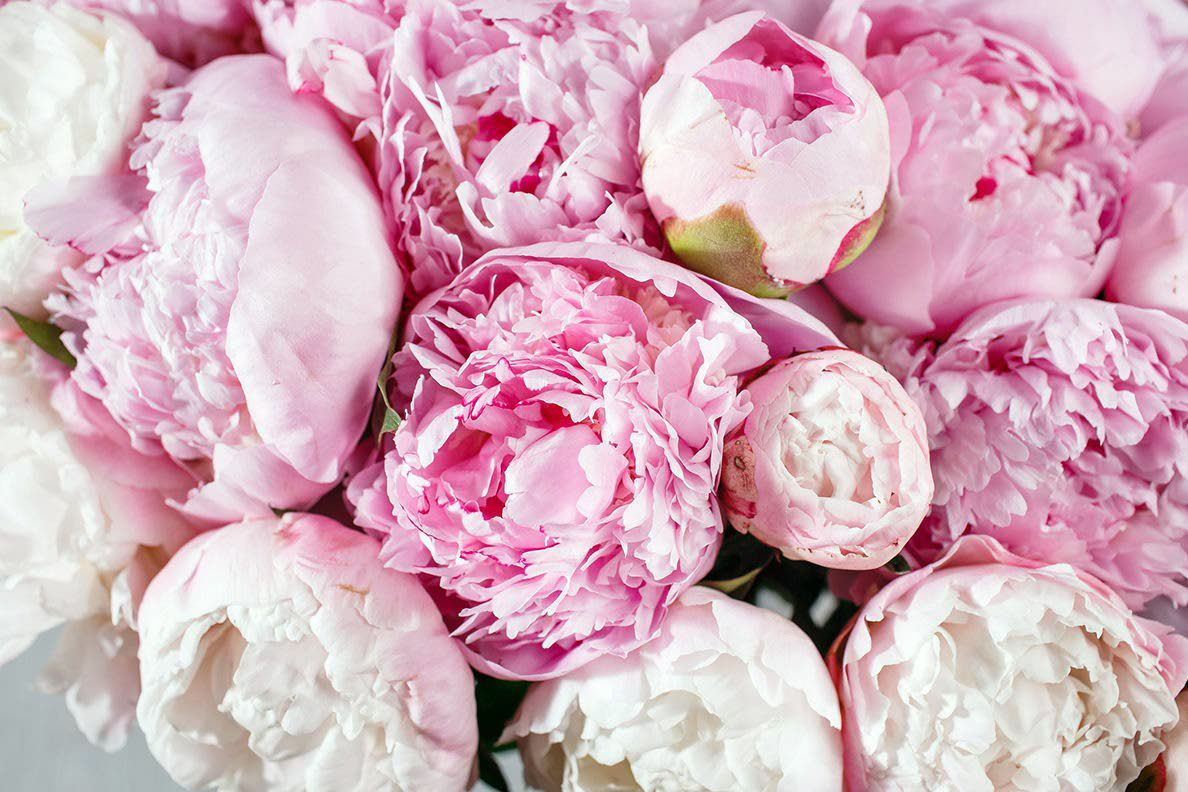 WSU scientists find a slate of unexpected diseases in peony