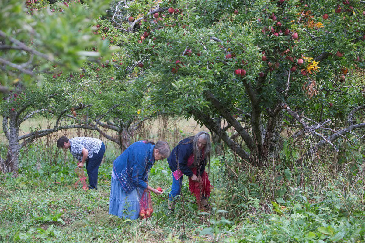 Gleaning gives good feelings and apples
