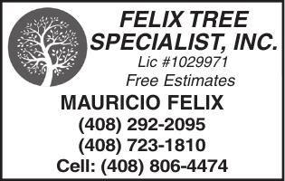 FELIX TREE