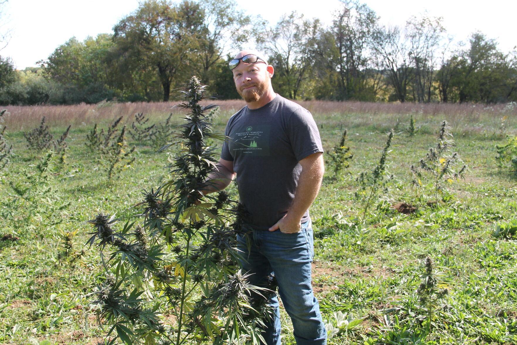 Loudoun hemp farmers see opportunity in growing market