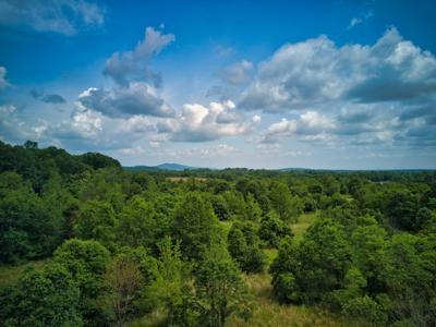 Stumptown Woods