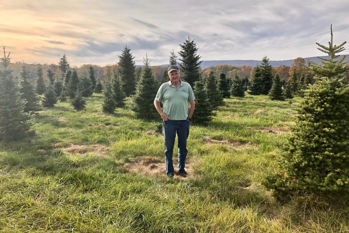 Loudoun County S Christmas Tree Farmers Continue Proud Tradition Of Multigenerational Business News Loudountimes Com