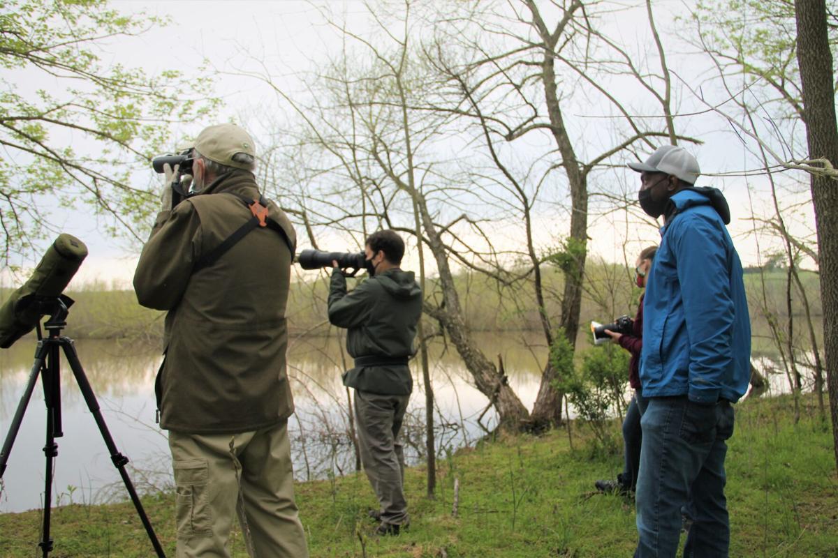 Dulles Greenway Wetlands