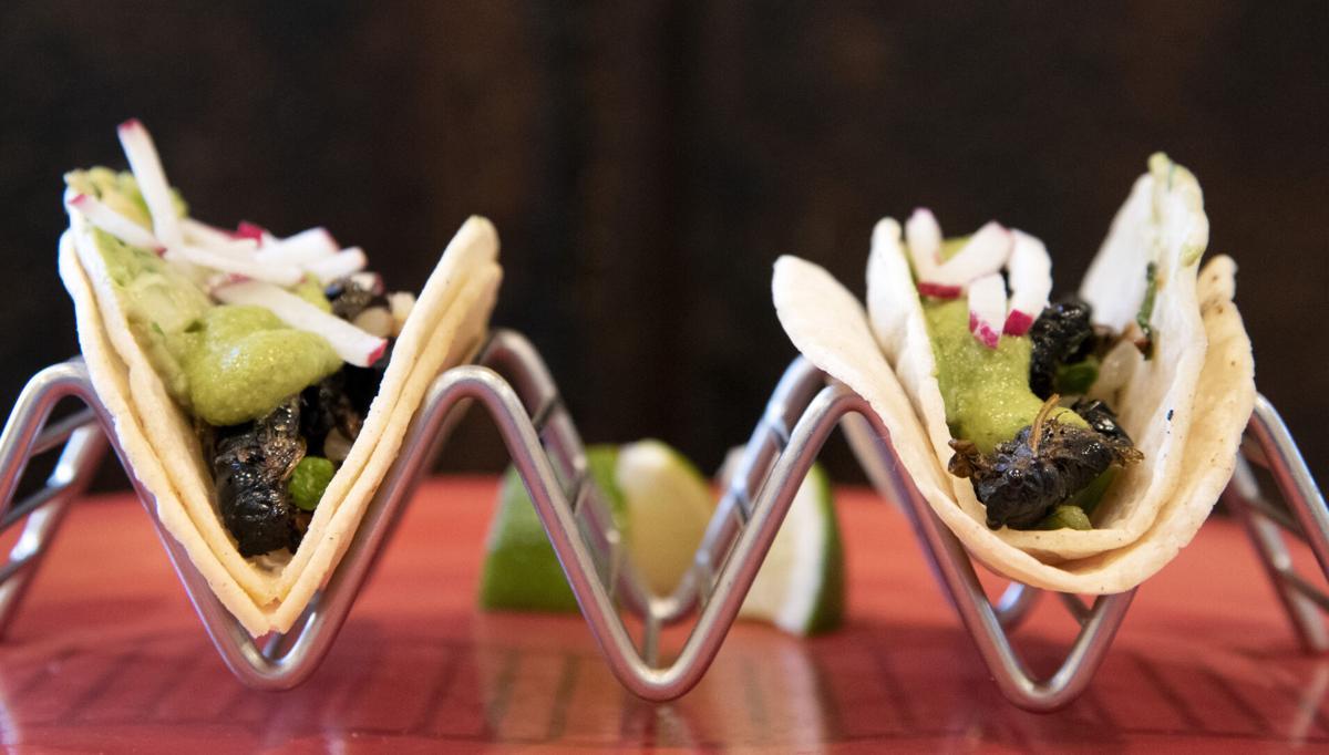 Cicada Tacos