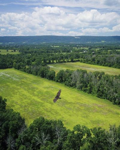 Land Trust of Virginia records 205 acres under conservation easement in Loudoun