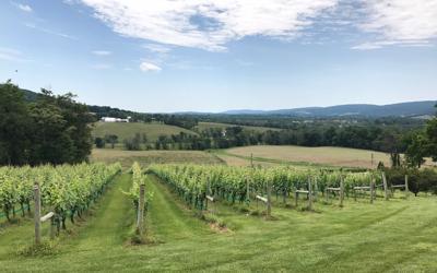 Hillsborough Winery