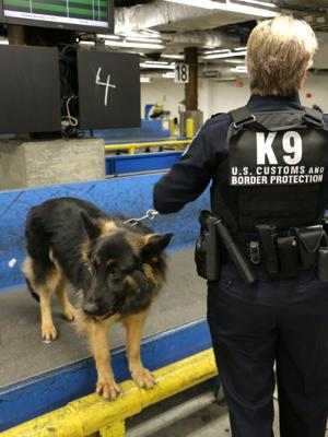 Dulles CBP K9 unit discovers four outbound marijuana shipments