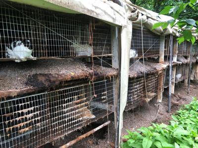 Animals seized in hoarding case