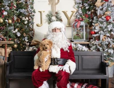 Annual Paws and Claus event raises over $3K for Loudoun Pet Pantry
