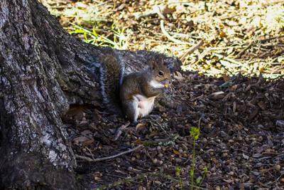 PHOTOS: A Squirrel's World