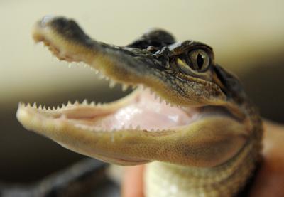 Alligator Research Facility
