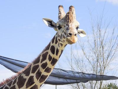 10-23-17 BR Zoo