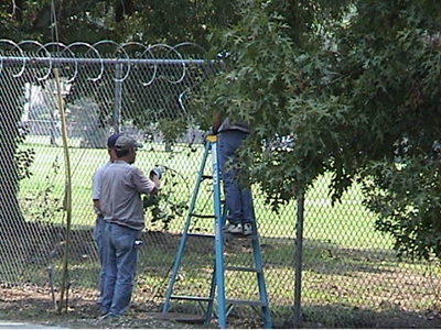 LSU Barbed Wire Removal