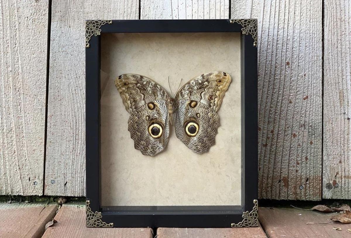 framedfindings