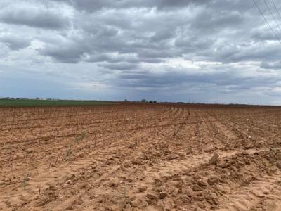 Farmers need rain