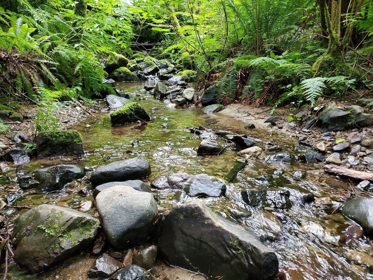 Waterfall trail 2