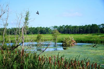 Lookin out over a Florida marsh