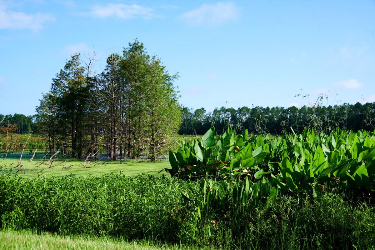 A lush green field with trees