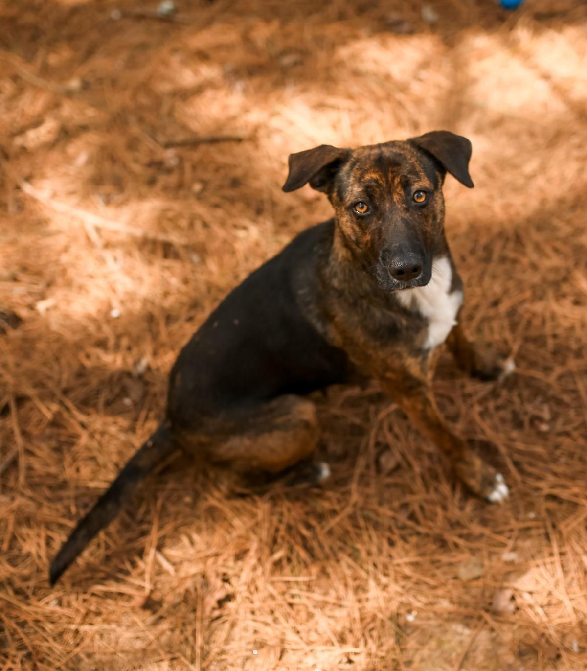 'Samantha' is shelter's Dog of the Week