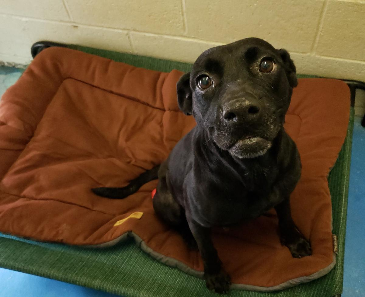 'Fantasia' is shelter's Dog of the Week